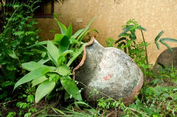 Spring gardening is a dangerous sport?….